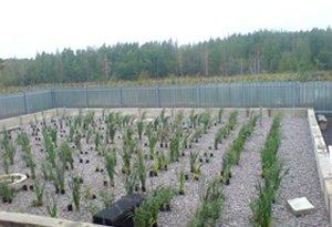 патрубки с высаженными растениями